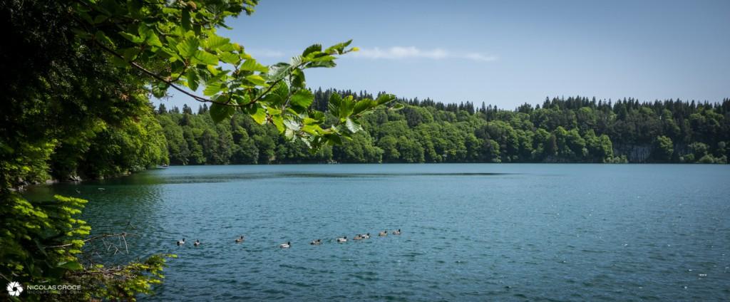 Canards sur le Lac Pavin